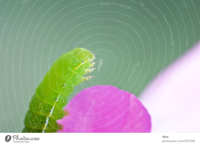 Nature Green Pink Illuminate Caterpillar