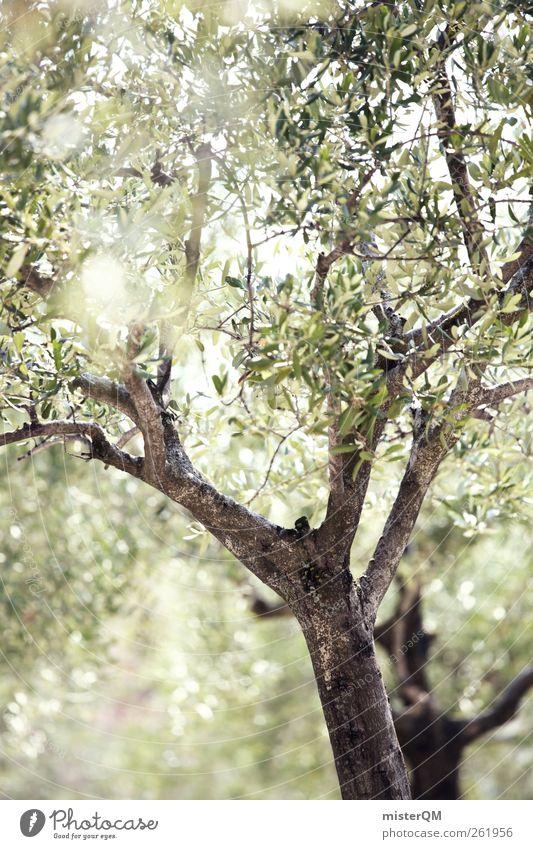 Olive grove. Environment Nature Landscape Plant Esthetic Contentment Olive tree Olive leaf Olive harvest Green Mediterranean Avenue South Italy