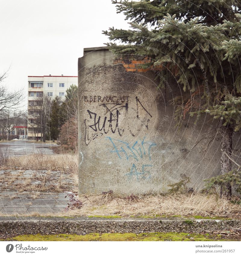Old City Tree Loneliness Wall (building) Wall (barrier) Dirty Broken Gloomy Letters (alphabet) Transience Past Decline Shabby Ruin GDR