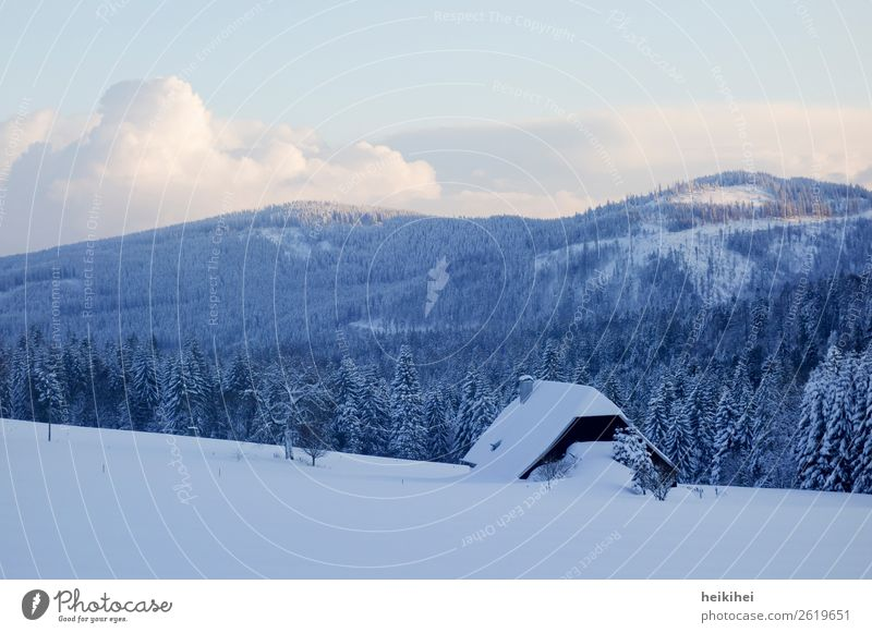 Winter idyll in the Black Forest Vacation & Travel Tourism Trip Adventure Far-off places Freedom Sightseeing Snow Winter vacation Mountain Hiking Nature