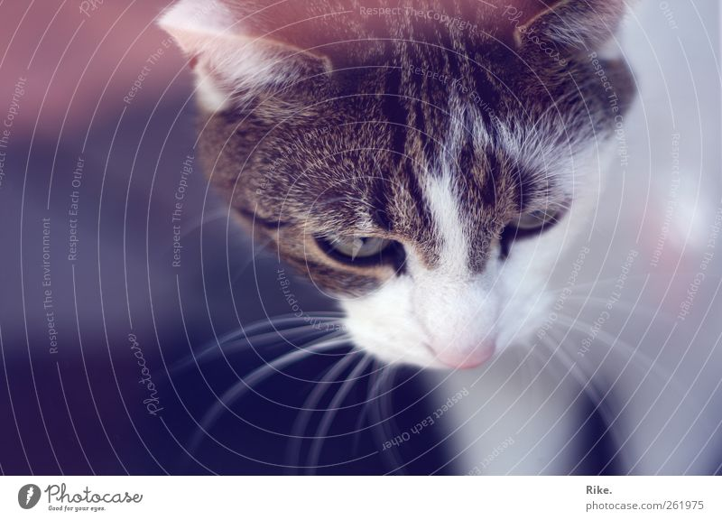 Another cat portrait. Pet Cat Observe Dream Threat Beautiful Near Wild Soft Watchfulness Discover Calm Whisker Cute Colour photo Interior shot Deserted