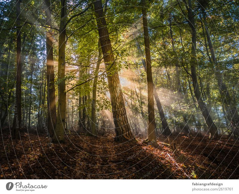 morning sun Environment Nature Landscape Plant Earth Sun Sunrise Sunset Sunlight Spring Beautiful weather Fog Tree Grass Moss Leaf Foliage plant Forest