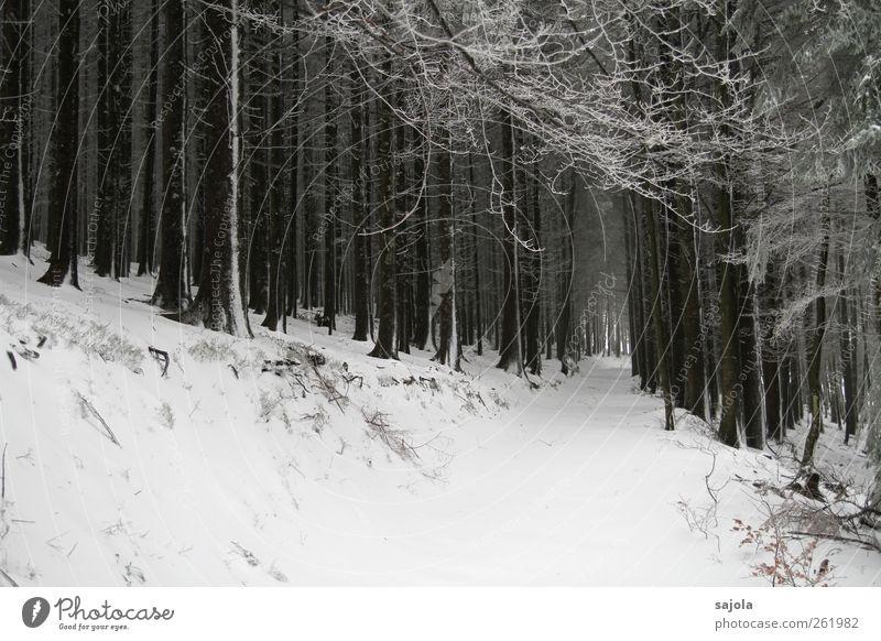 Nature White Tree Plant Winter Forest Environment Landscape Snow Stand Snowscape