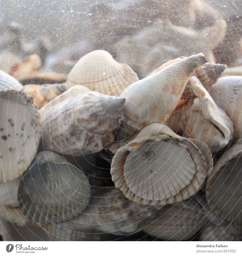 Mussels in a jar. Nature Esthetic Animal Seafood Marine animal House (Residential Structure) Mollusk Lime Water Freshwater Sea water Fossil shell money Cockle