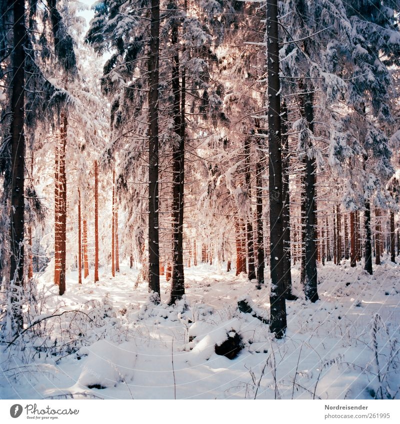 Nature Tree Plant Winter Loneliness Calm Forest Relaxation Life Landscape Snow Ice Elegant Glittering Fresh Esthetic