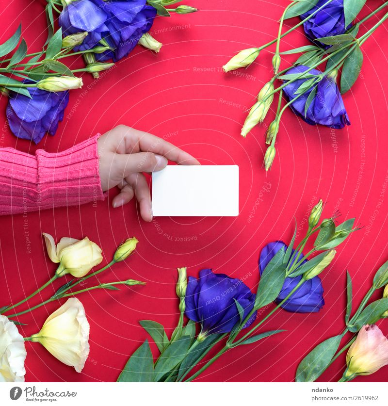 blank white paper business card Design Beautiful Skin Feasts & Celebrations Valentine's Day Mother's Day Business Woman Adults Hand 1 Human being 18 - 30 years