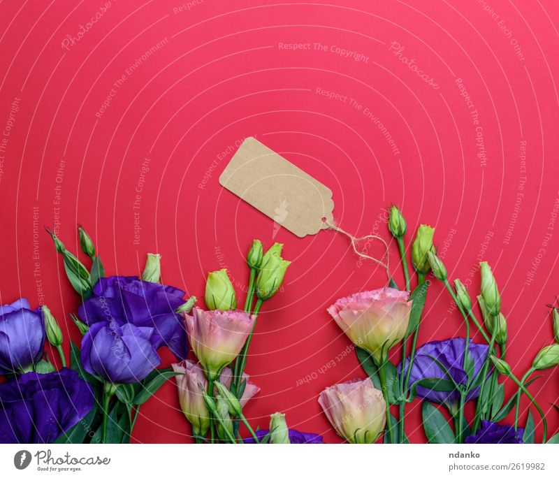 flowers Eustoma Lisianthus Blue Green Red Flower Leaf Yellow Blossom Natural Feasts & Celebrations Copy Space Pink Fresh Gift Blossoming Idea Paper
