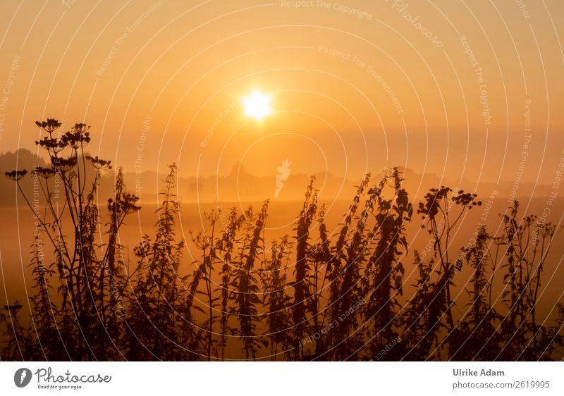 Mystic sunrise Design Harmonious Calm Meditation Decoration Wallpaper mourning card Funeral service Nature Landscape Plant Sun Summer Autumn Beautiful weather