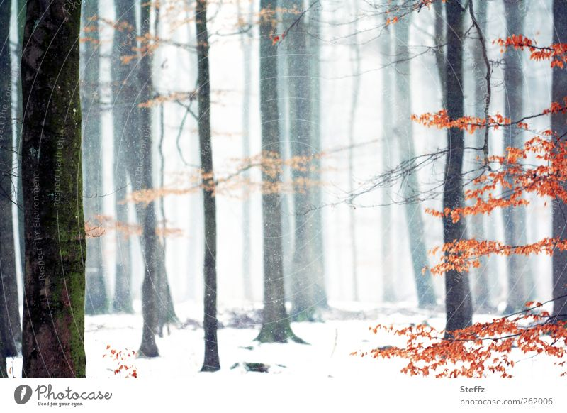 Nature Beautiful White Tree Landscape Calm Winter Forest Snow Snowfall Weather Fog Snowscape December Twigs and branches Trickle