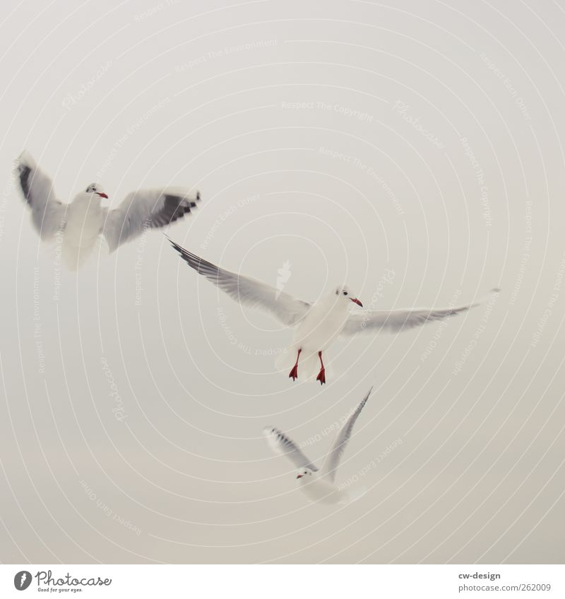 Sky White Summer Ocean Winter Beach Animal Black Calm Freedom Gray Warmth Air Bird Together Pink