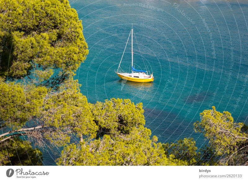 Vacation & Travel Nature Blue Green Water Tree Ocean Relaxation Calm Lifestyle Yellow Coast Living or residing Leisure and hobbies Esthetic Idyll