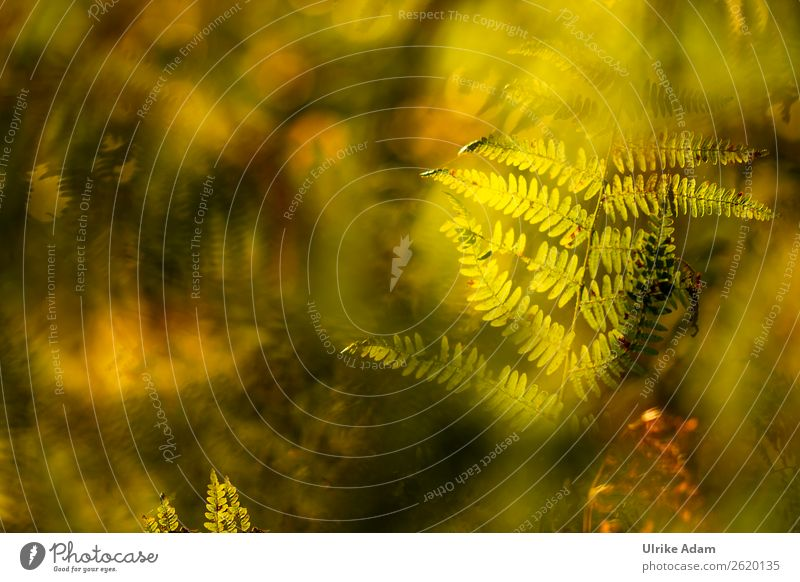 Fern in the light - Nature Wellness Life Harmonious Well-being Relaxation Calm Meditation Cure Spa Wallpaper mourning card Funeral service Plant Summer Autumn