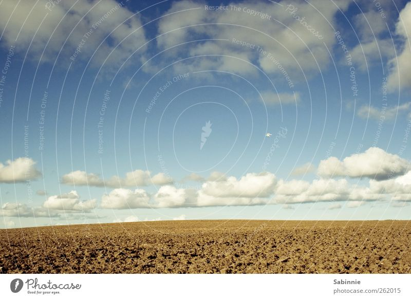 Sky Nature Blue White Clouds Yellow Environment Freedom Brown Earth Weather Field Wild Climate Elements