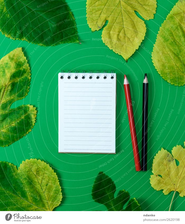 open notebook in line with white blank pages Education School Nature Plant Autumn Tree Leaf Paper Draw Bright Natural Clean Yellow Green Red Black White Idea