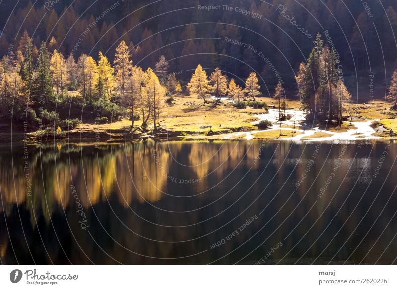 Mirrored in the mountain lake Life Harmonious Relaxation Calm Meditation Vacation & Travel Tourism Trip Hiking Nature Landscape Autumn Beautiful weather Larch