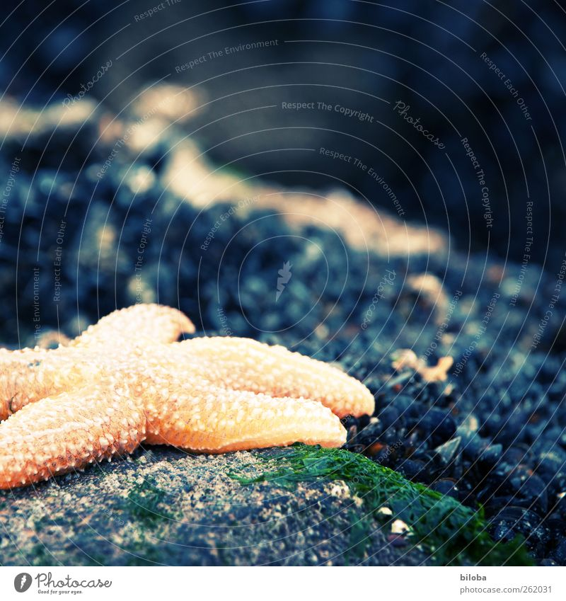 Green Animal Yellow Gray Gold Wild animal Marine animal Cross processing Starfish North Sea coast
