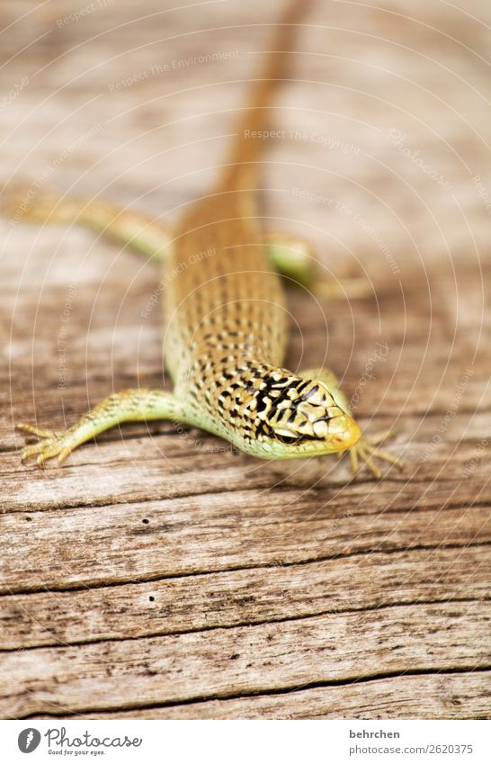 moin bumm tschack;) Animal portrait blurriness Sunlight Contrast Light Exterior shot Close-up Detail Deserted Day Colour photo Malaya Reptiles Tree