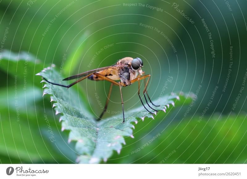 Fly on a leaf Close-up Macro (Extreme close-up) Insect Macro Animal Nature Colour photo Animal portrait