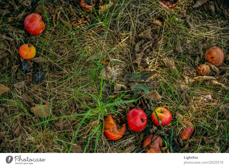 fall fruit meadow Nutrition Plant Tree Responsibility Hope Grief Death Threat Mysterious Sustainability Nature Beautiful Decline Past Transience Colour photo