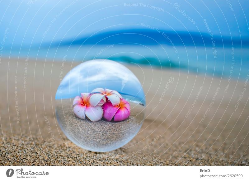 Bright Tropical Flowers in Glass Ball Reflection on Sandy Beach Beautiful Vacation & Travel Tourism Ocean Island Nature Landscape Coast Sphere Globe Exceptional