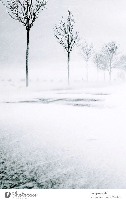 Nature White Tree Plant Winter Black Street Environment Landscape Snow Gray Snowfall Ice Wind Frost Storm