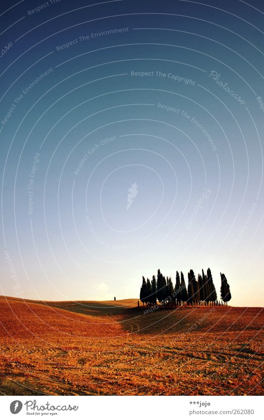 classic calendar motif. Landscape Esthetic Tuscany Tree Field Crete Earth Vacation & Travel Far-off places Clump of trees Plowed Hill Italy Agriculture Nature