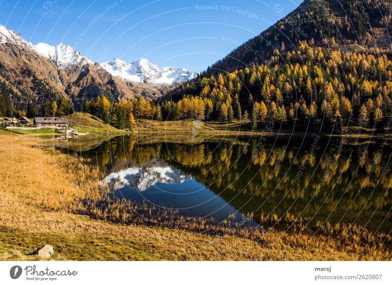 Autumn at Duisitzkarsee lake Calm Vacation & Travel Tourism Trip Mountain Hiking Nature Larch Forest Alps Snowcapped peak Lake Mountain lake Duisitz Lake