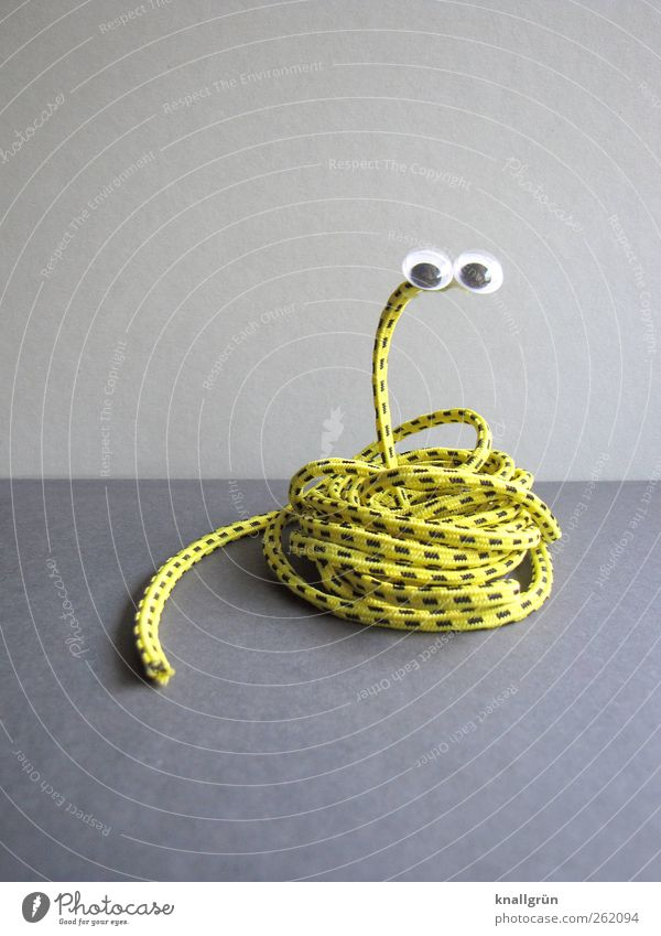 grass snake Animal Snake 1 Observe Funny Round Yellow Gray Black Joy Elastic band Striped Eyes Saucer-eyed Handicraft Wound up Colour photo Studio shot Deserted