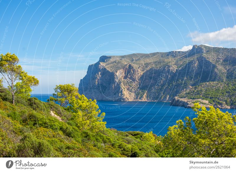 View to the steep coast of Mallorca Environment Nature Landscape Plant Animal Tree Bushes Rock Coast Bay Ocean Discover Relaxation Vacation & Travel