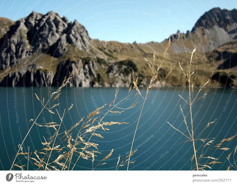 seaweed Environment Nature Landscape Plant Elements Water Sky Cloudless sky Autumn Beautiful weather Bushes Wild plant Rock Alps Mountain Lünersee
