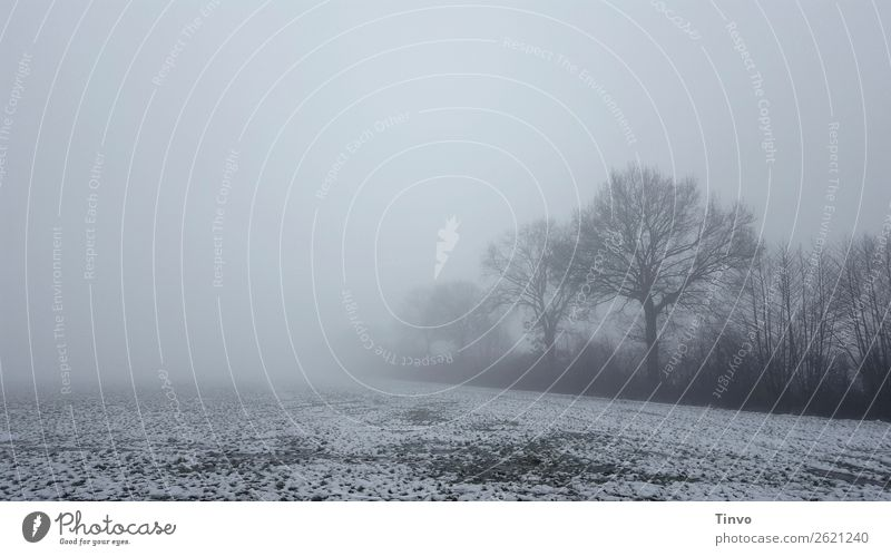 Winter fog landscape with trees at the edge of the field Nature Landscape Fog Snow Tree Meadow Field Gray Calm Stagnating Foggy landscape Frost Rural Ghostly