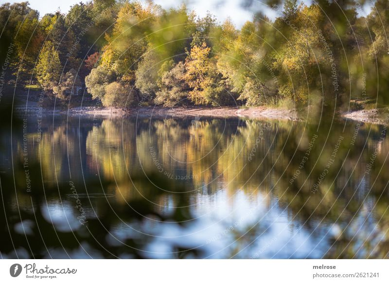 autumnal trees with reflection at the lake Nature Landscape Water Sky Clouds Sunlight Autumn Beautiful weather Plant Tree Bushes Foliage plant Wild plant