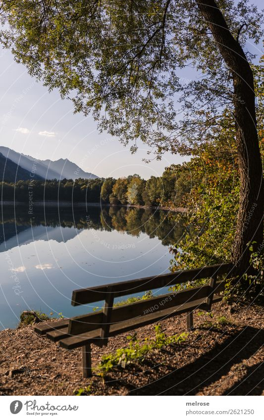 Park bench with trees on the lake shore Nature Landscape Earth Water Sky Clouds Sunlight Autumn Beautiful weather Plant Tree Grass Bushes Leaf Foliage plant