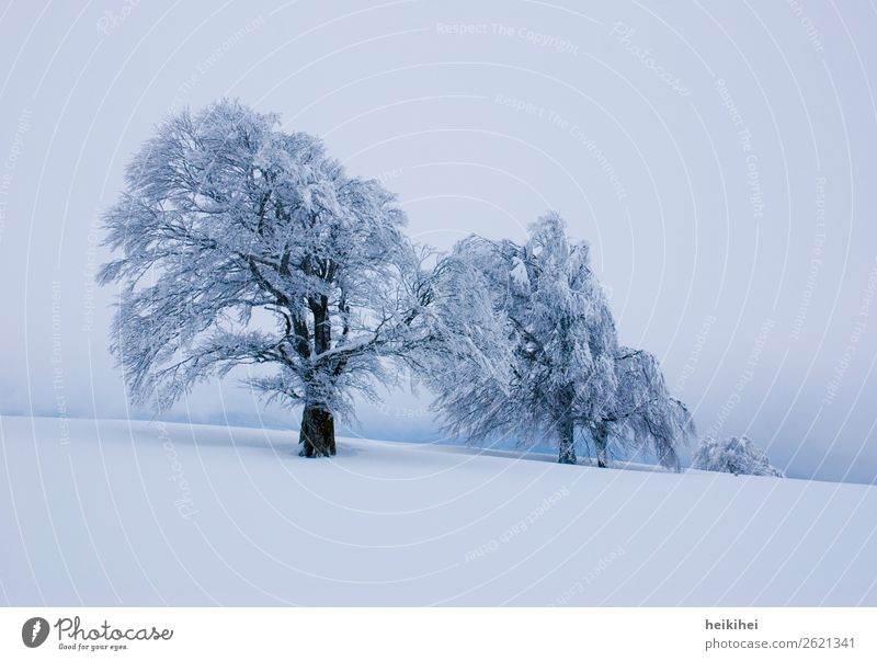 winter trees Leisure and hobbies Vacation & Travel Tourism Trip Adventure Far-off places Freedom Winter Snow Winter vacation Mountain Hiking Nature Landscape
