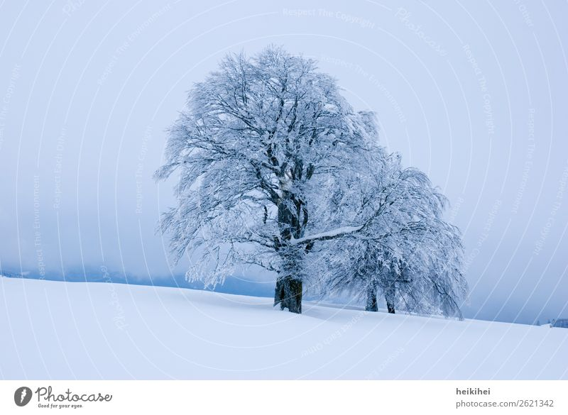 Winter atmosphere in the Black Forest Tree Winter vacation Snow Frost Ice Nature Exterior shot Deserted Cold Colour photo Landscape Day Environment White Plant