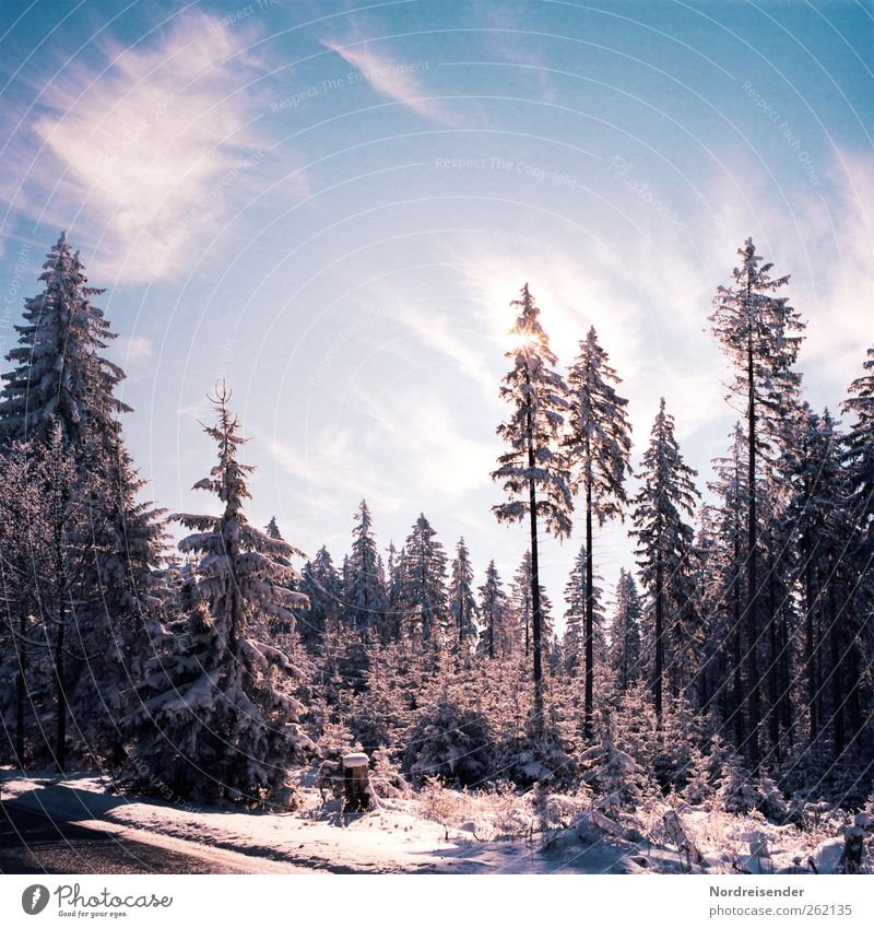 Nature Blue White Plant Sun Winter Clouds Calm Forest Relaxation Street Landscape Snow Ice Glittering Climate