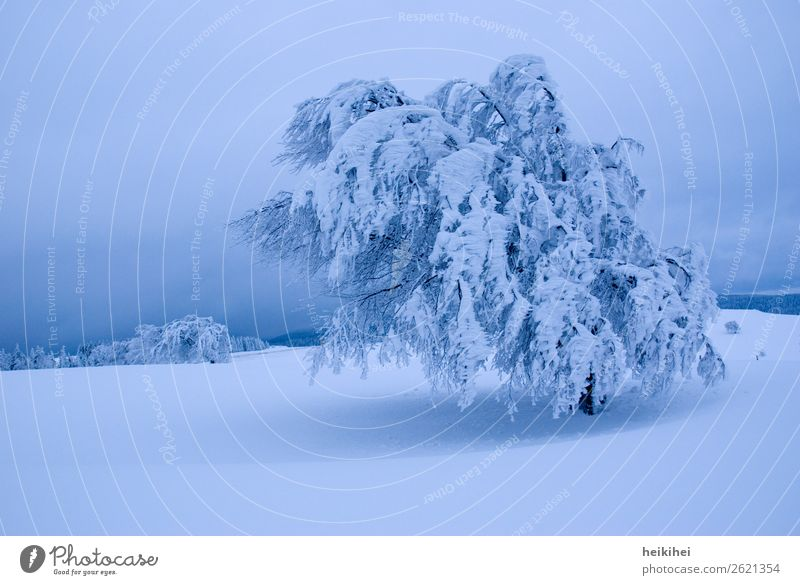 winter Harmonious Contentment Relaxation Calm Winter Snow Winter vacation Mountain Hiking Nature Landscape Sky Tree Adventure Black Forest Beech tree Wind Card