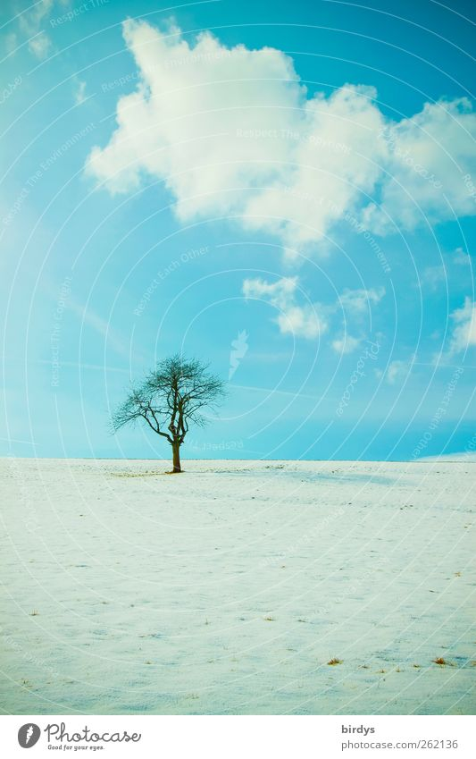 silent Nature Landscape Sky Clouds Winter Beautiful weather Snow Tree Meadow Esthetic Authentic Natural Positive Blue Calm Purity Loneliness Peace Idyll Cold