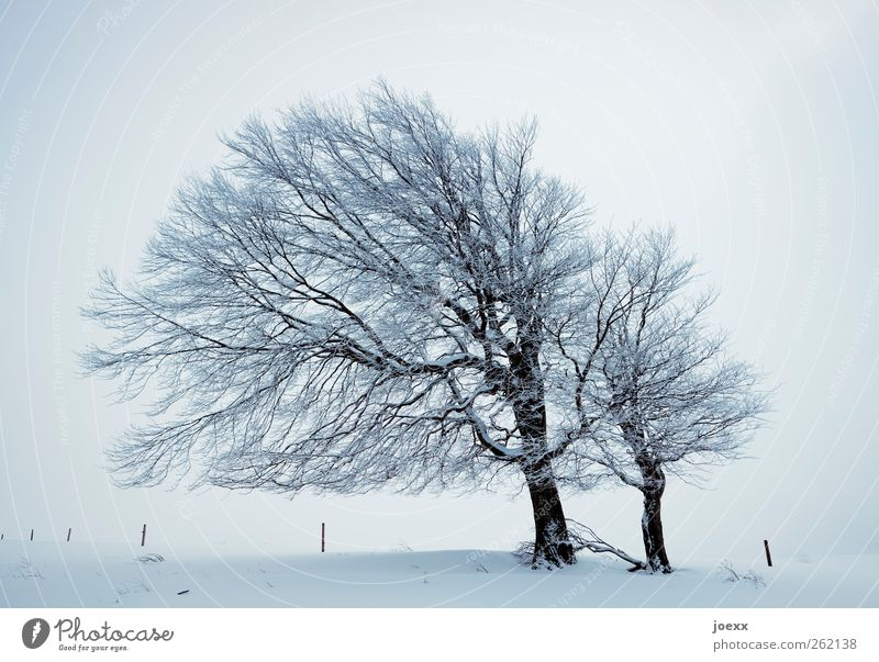 wind Nature Winter Weather Wind Fog Ice Frost Snow Tree Field Infinity Bright Gray Black White Cold Wind cripple Beech tree Schauinsland Colour photo
