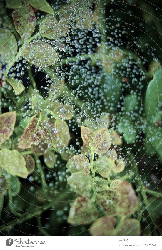 Thousand dew drops Environment Nature Landscape Plant Drops of water Summer Climate Weather Beautiful weather Bushes Leaf Exceptional Fresh Glittering Bright