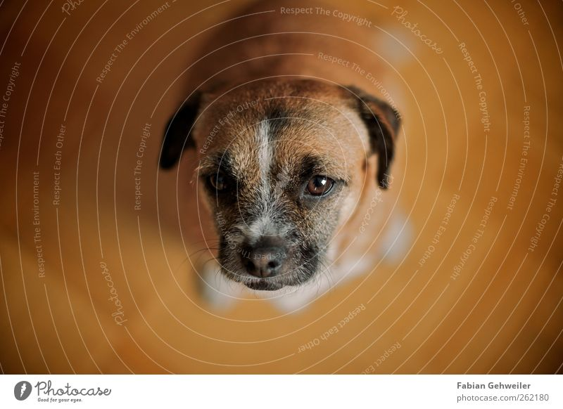 Look, I've got a treat for you! Pet Dog 1 Animal Love of animals Loyalty Beg Colour photo Interior shot Shallow depth of field Looking