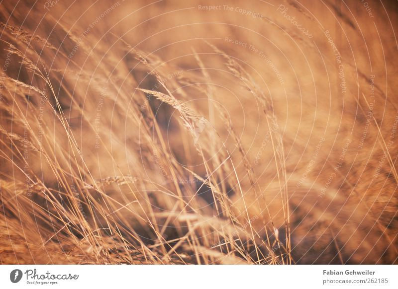 steppe Nature Wild plant Park Esthetic Movement Idyll Steppe Colour photo Exterior shot Deserted Day Shallow depth of field