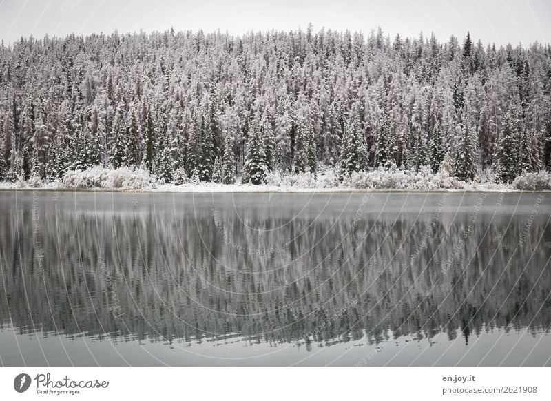 colder Nature Landscape Plant Winter conifers Fir tree Spruce Forest Lakeside Cold White Calm Climate Symmetry Vacation & Travel Canada Winter forest Snowscape
