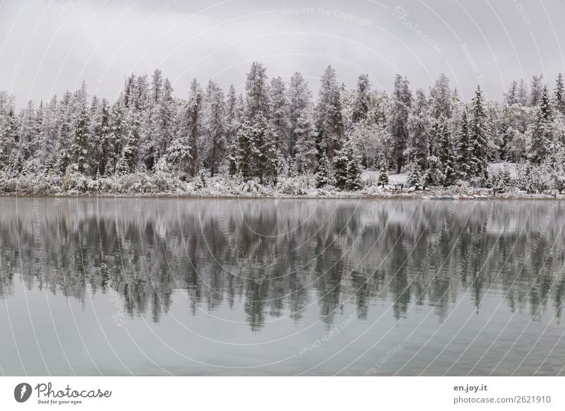 snow Vacation & Travel Trip Winter Snow Winter vacation Nature Landscape Ice Frost Forest Lakeside White Calm Idyll Cold Climate Symmetry Grief Sadness