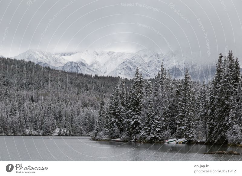 Vacation & Travel Nature Landscape Forest Winter Mountain Cold Snow Lake Trip Fog Idyll Climate Snowcapped peak Lakeside Bad weather