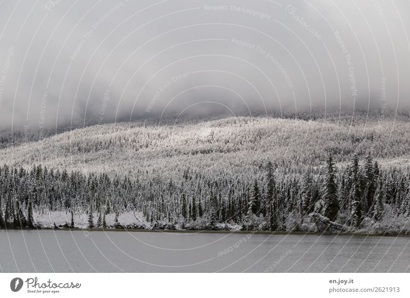 sunspots Vacation & Travel Trip Winter Snow Winter vacation Nature Landscape Clouds Weather Fog Ice Frost Forest Hill Lakeside Pyramid Lake Cold Hope
