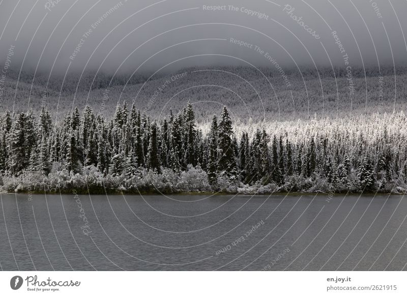 Vacation & Travel Nature Landscape Forest Winter Religion and faith Cold Snow Lake Trip Fog Climate Hope Hill Winter vacation