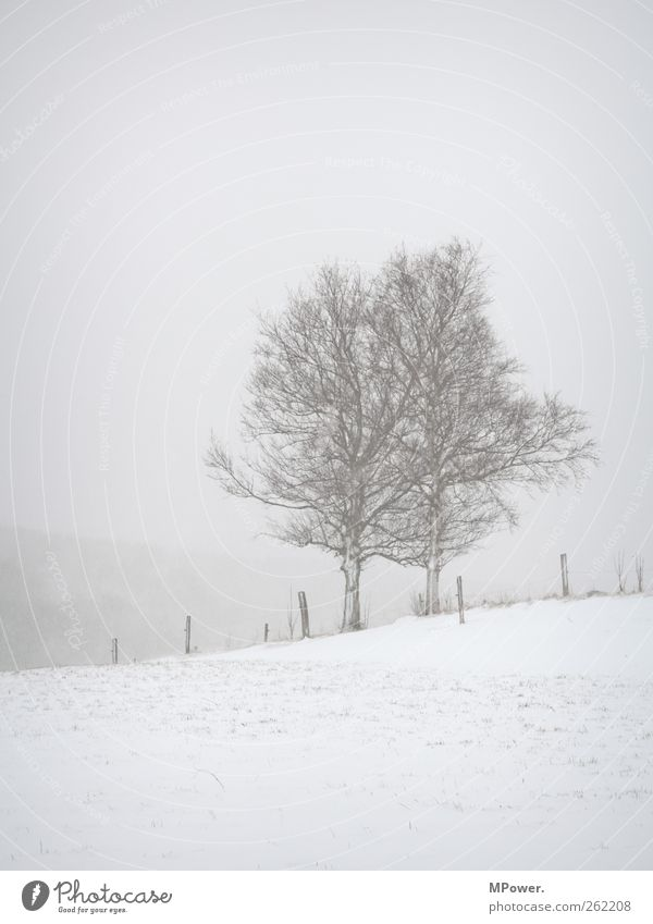 White Tree Winter Loneliness Snow Gray Snowfall Adventure Force Hope Gloomy Hill Infinity Creepy Fence Fatigue
