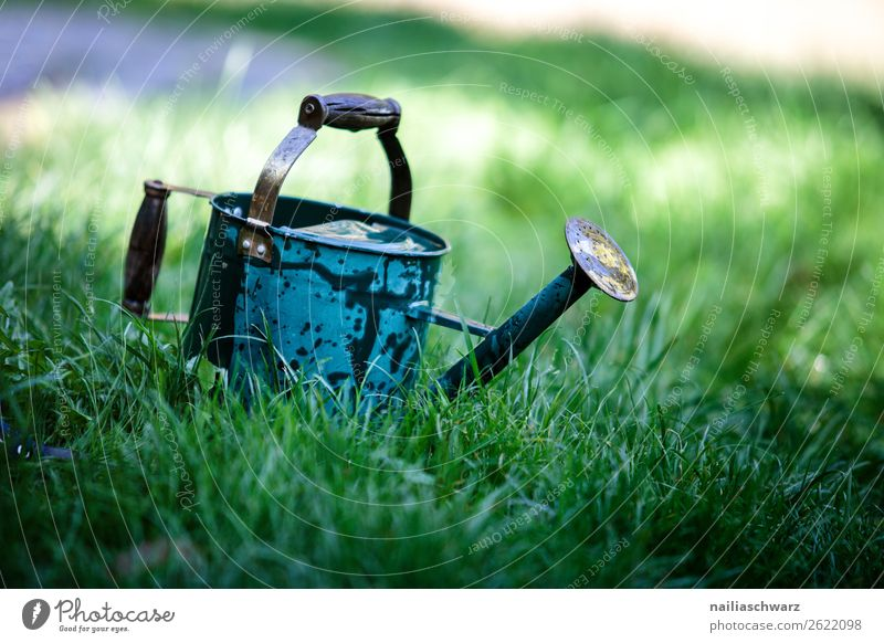 old watering can Plant Spring Summer Grass Foliage plant Garden Park Meadow Decoration Watering can Metal Old Authentic Natural Blue Green Turquoise