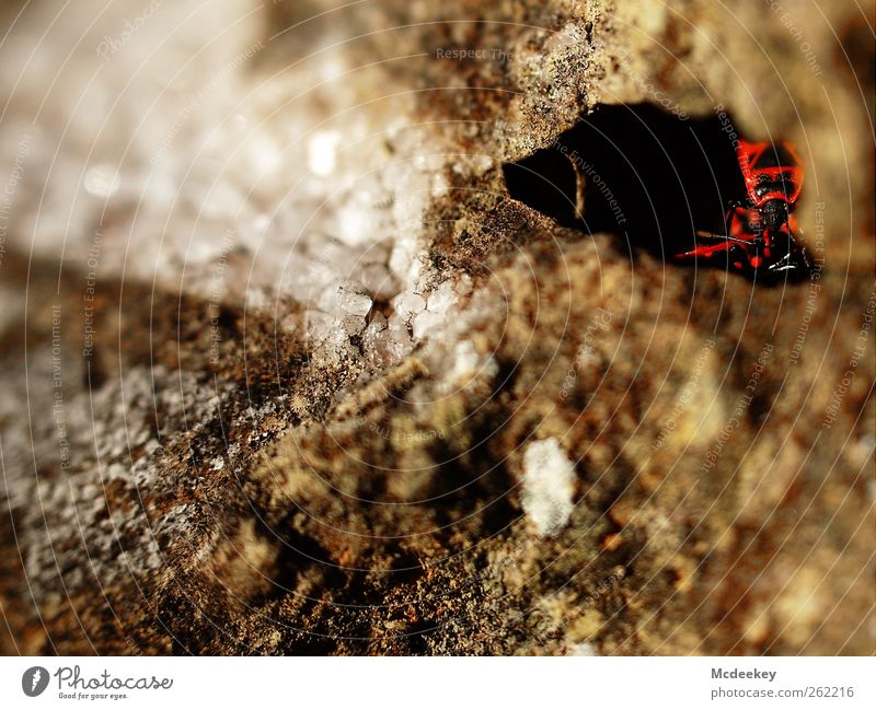 Secure hiding place Environment Nature Park Animal Wild animal Beetle Firebug 3 Group of animals Natural Curiosity Brown Gray Red Black White Stone Crystal Cave